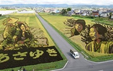 29日に刈り取り体験が行われる田舎館村の第1田んぼアート「おしん」