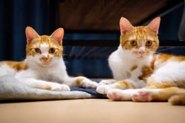 仲良しのまるくん(左)、こあくん(右)
