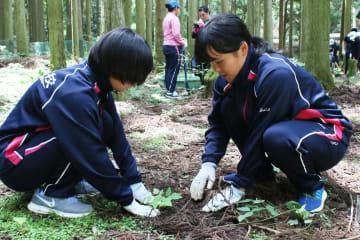 ツシマウラボシシジミの幼虫が食べるケヤブハギやヌスビトハギの苗を植える生徒ら=対馬市北部の山中