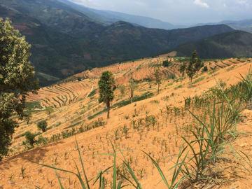 メキシコ企業、雲南省でアボカド栽培・加工プロジェクトに投資