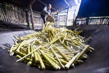 収穫期迎えた「タケノコの王様」 重慶市
