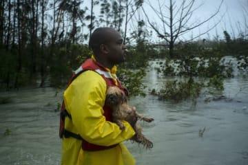 バハマで迷い犬の飼い主を探すボランティア(写真:AP/アフロ)