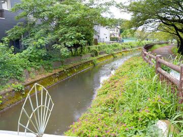 市民の憩いの場にもなっている見沼代用水路西縁=4日午後、さいたま市浦和区