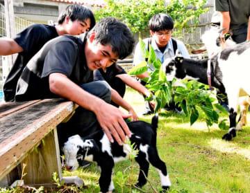 生後1日の子ヤギ(中央)を囲む辺土名高校の生徒たち=8月27日、大宜味村・辺土名高校