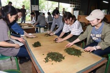茶葉の加工作業を体験する学生たち=高梁市松原町神原
