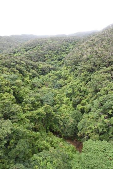 (資料写真)沖縄本島北部地域の森