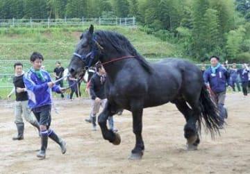 飾り馬として奉納する馬の扱いを練習する参加団体の口取りたち=熊本市南区