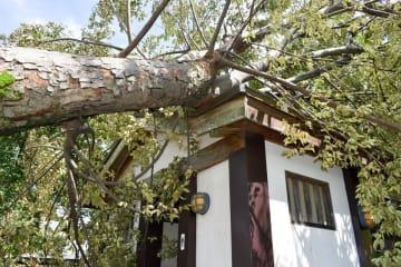 園内の公衆トイレの屋根にケヤキが倒れた厚木市の山中陣屋跡史跡公園=9日午後1時ごろ、同市下荻野