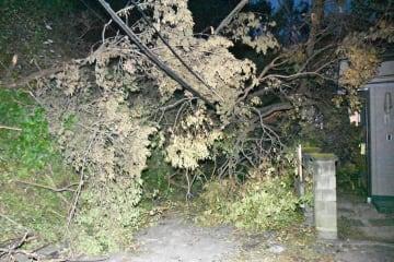 土砂崩れや倒木で停電が続いている鎌倉市二階堂=10日午後6時25分ごろ