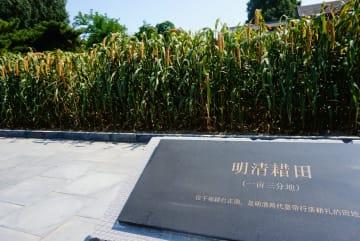 先農壇の籍田、100年ぶりの豊作迎える 北京市