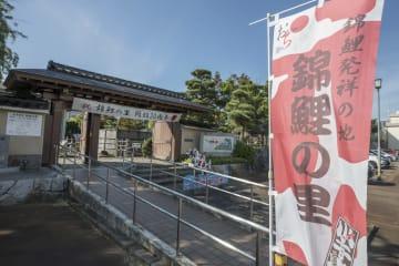「錦鯉を通して友情の輪を広げたい」錦鯉の里を訪ねて 新潟県