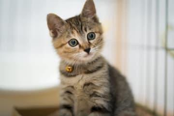 文句なしに可愛い子猫時代