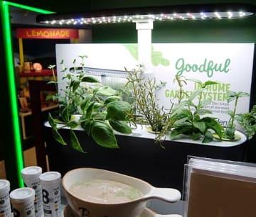 「ハーベスト・スリム・カウンタートップ・ガーデン&グルメ・ハーブ・シード・キット(Harvest Slim Countertop Garden & Gourmet Herbs Seed Kit)」