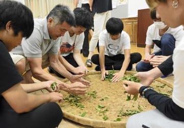 生産者の指導を受けながら生の茶葉をもむ水俣高定時制の生徒ら=水俣市