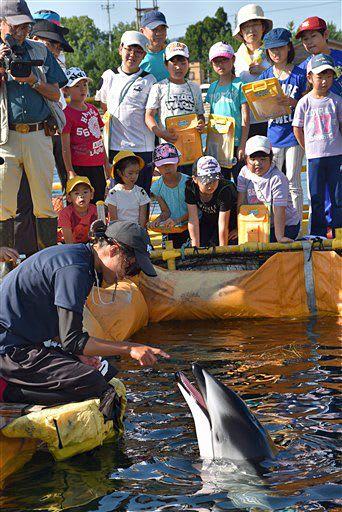 イルカを間近で観察する児童たち