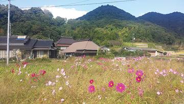 ▲昨年の開花の様子