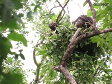 講演会「ベッドで眠るチンパンジー」