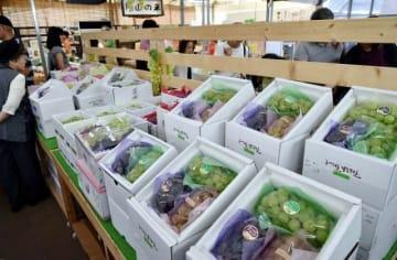 多彩な品種のブドウが並ぶ農マル園芸吉備路農園の店内