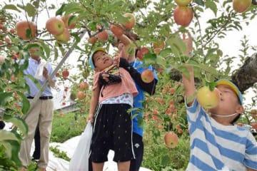 おいしそうなリンゴを見つけて手を伸ばす園児ら