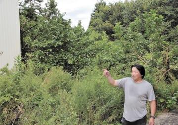 帰還困難区域にある養蜂場を訪れた小川さん。草木が伸び放題で養蜂箱は見えない=8月9日、福島県双葉町