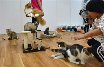 ネコと触れ合える広場で、たくさんのネコと遊ぶ来場者