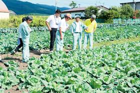農作物の生育状況を調べる農業委員ら