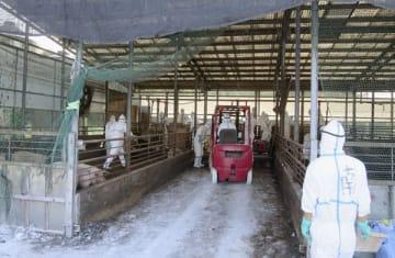 豚コレラに感染した豚が飼育されていた養豚場で行われる防疫作業=14日午前、秩父市(県提供)