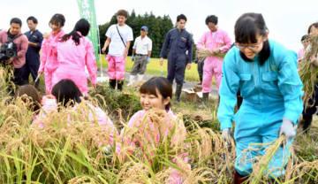 県産日本酒造りに向け稲刈りに励む学生とサマンサタバサの若手女子社員