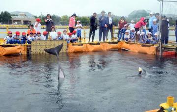 イルカを観察する児童ら