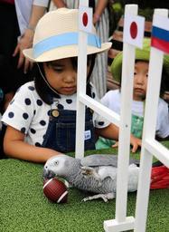 日本のゴールをくぐり、「トライ」を決めるヨウム=姫路セントラルパーク