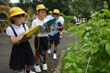 ハーブ採集に取り組む児童たち=水戸市小吹町の市植物公園