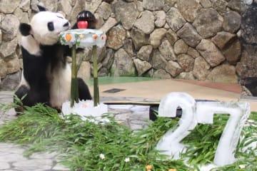 15頭の父であるジャイアントパンダの永明(撮影:神戸万知)