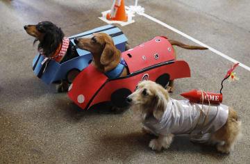 犬の衣装コンテストとドッグレース、米サンフランシスコで開催