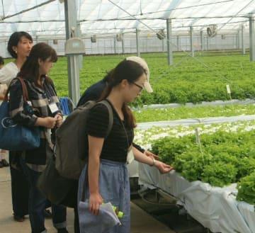 ハウス内で水耕栽培されるレタスを見学する参加者=国東市安岐町大添