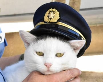「交通事故抑止隊員」に任命されたタマ。特製制帽をかぶってキリッ!