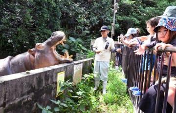 大きく口を開けて参加者からの餌を待ち受けるカバのモモエ=16日、沖縄市・沖縄こどもの国