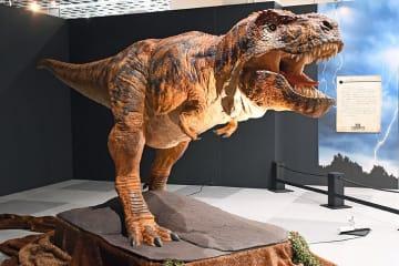 咆哮を上げながらリアルに動くティラノサウルスのロボット=青森市の東奥日報新町ビルNew'sホール