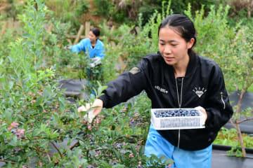 ファミリーファームの発展に成果 中国農業農村部