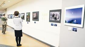 会員や会友、一般公募者のレベルの高い写真が展示されている道美展写真部胆振支部展
