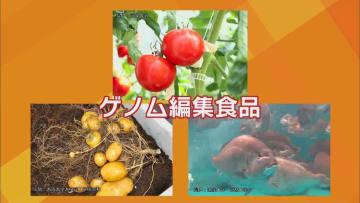 肉厚マダイに毒なしジャガイモ…ゲノム編集食品が食卓へ 「表示義務なし」で不安の声も…