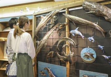 和歌山県太地町の町立くじらの博物館に展示された、イルカやクジラを題材にした作品=21日午前