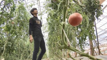 目指すはトマト農家!地域住民に支えられながら夢への一歩を踏み出した若者の物語【長野発】