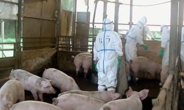 ワクチン接種の地域、段階拡大へ 豚コレラ発生県から順次