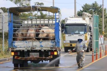 20日、韓国南部・済州島でアフリカ豚コレラの感染阻止に向けて実施された車両の消毒作業(聯合=共同)