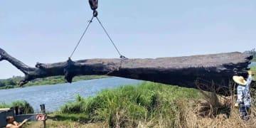 重さ12トン、5千年前の「埋もれ木」を発掘 海南省