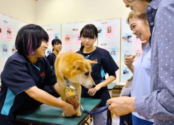 動物愛護フェスティバルの会場に設けられた専門学校生による犬の爪のお手入れコーナー