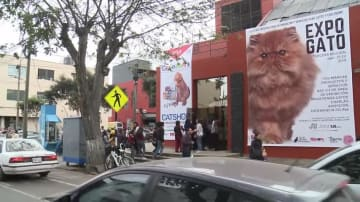 ペルーのネコ博覧会に珍種「スフィンクス」登場