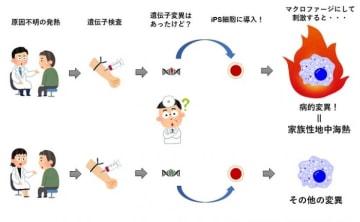 研究の概要図。(画像:京都大学発表資料より)