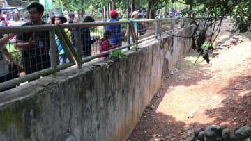 インドネシアに生息する世界最大のトカゲ