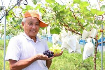 道の駅「くしま(仮称)」開業に合わせ、ブドウ栽培に乗り出した荒山修三さん